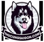 Mua bán chó husky, bán chó alaska, phối giống chó uy tín tại HCM