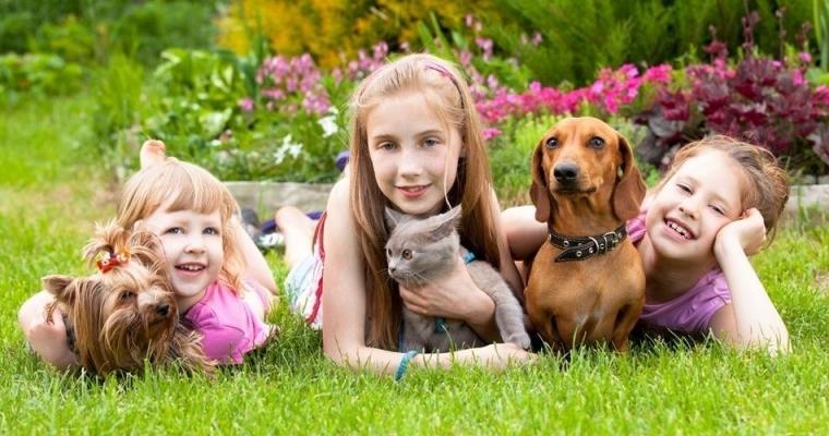 10 hành vi lạ của loài chó
