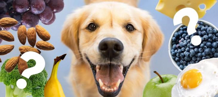 7 điều bạn cần biết về thức ăn chó