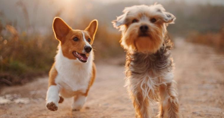 Những hành vi kì quặc của loài chó