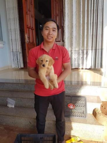 Bán chó Golden Retriever HCM